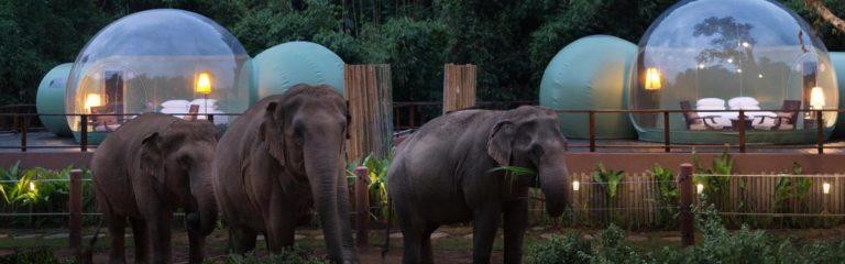 «Пузыри джунглей» приглашают туристов провести ночь среди слонов